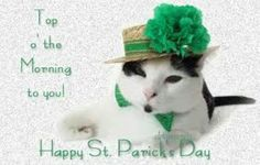 Kitten St Patrick's Day Best Picture For Patrick day activities For Your Taste You are looking for something, and it is going to tell you. Patrick Quotes, St Patricks Day Quotes, Happy St Patricks Day, Thanksgiving Cards, Holiday Cards, Pretty Cats, Cute Cats, Funny Cats, Irish Greetings