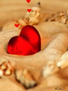 heart sea shell love gif photo by Animated Heart, Animated Gif, Corazones Gif, Best Natural Hair Products, Romantic Gif, Heart Gif, Cute Love Gif, Gifs, Gif Photo