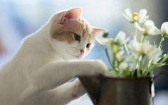 "picolaine-chats:  "" 💕💕  initiation au jardinage.  *  """