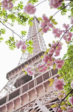 Cherry Blossoms at the Eiffel Tower Photo Print