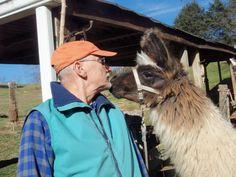 Escapes: A little llama love in Lexington, Va.