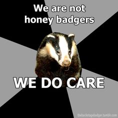 "Submitted by demons-i-get And just for the record, the ""Backstage Badger"" is a European Badger. Different breed. =)  Official Ba..."