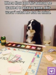 Lines of communication must've broken down somewhere during that conversation! #dogs |  Cute and Funny Memes
