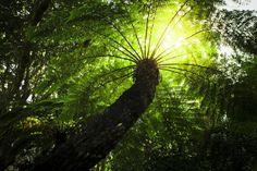Kirstenbosch, Africa's Garden on Behance