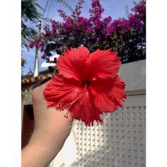 Flowers of Brazil. Follow me Instagram @tropicalambition ;)