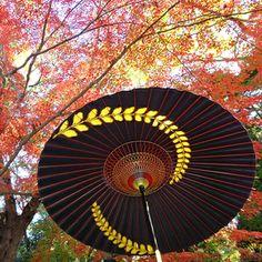 Fall   Tsujikura (The Japanese umbrella, The Japanese lantern, Akari) Kyoto