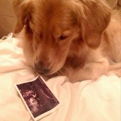 Baby announcement with a dog #LiAR