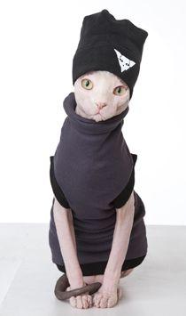 About Sphynx Cat Wear