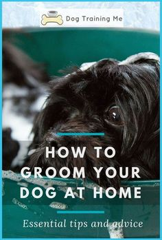 Best ways to tidy in the works after dogs-Here, we lecture to prevention, dog sick, poo and wee (sorry), dog hair and muddy paw prints on carpets. locate more unmissable cleaning tips, ... * More guide can be found by clicking on the image. Dog Grooming Tips, Dog Grooming Supplies, Puppy Training Guide, Training Your Dog, Cheap Pet Insurance, Coconut Oil For Dogs, Dog Cleaning, Cleaning Tips, French Bulldog Puppies