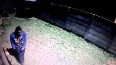 Suspeito foge e pula até muro após ficar com medo de cãozinho