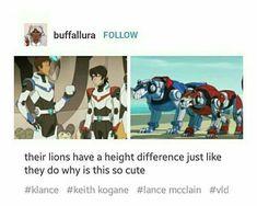 Sus leones tienen diferencias de altura justo como ellos, porqué esto es tan tierno?