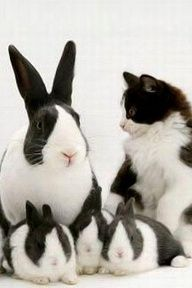 Black and White and Bunnies All Over