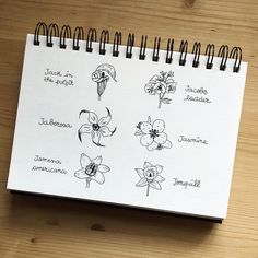 Bullet journal flower doodles, bullet journal floral doodles, Jack in the Pulpit drawing, Jacobs Ladder drawing, Jaborosa drawing,  Jasmine drawing, Jamena Americana drawing, Jonquil drawing.   @alicinaonearth