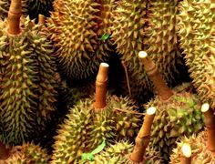 Durian, native to Brunei, Malaysia and Indonesia