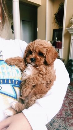 Cute Dogs And Puppies, I Love Dogs, Puppy Love, Puppies Puppies, Doggies, Cutest Dogs, Retriever Puppies, Adorable Dogs, Cute Little Animals
