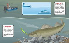 Trolling has dominated walleye tournaments for decades and put up the biggest stringers for recreational anglers, too. But lately, instead of covering miles of water with six lines in tow, savvy pros are winning major tournaments by targeting small areas and casting with spinning gear, in an approach similar to largemouth fishing. Here's how it works, and why it'll score more monster 'eyes.