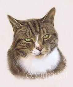 """""""Pip"""" pastel cat portrait commission"""