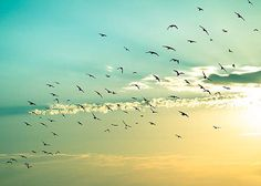 nature photography birds in flight beach sunrise photography print