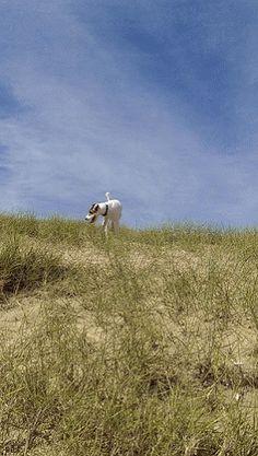 Harrisons Dogs - Local Dog Walking www.harrisons-dogs.co.uk #Dogwalker #Clapham #Balham #dogs #movingimages #claphambuzz