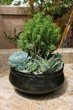 Orange County | Custom Plant Arrangements | California Plantscaping