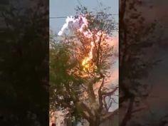 elektrik ağaca ne yaptı