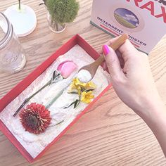 Welcome to the 20 Mule Team Borax online. Here you can find borax offers, its many uses, and where to buy it! Craft Presents, Diy Crafts For Gifts, Crafts To Make, Fun Crafts, Arts And Crafts, How To Preserve Flowers, Preserving Flowers, Fun Wedding Invitations, Wedding Programs