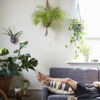 おうち緑化計画。育てやすい観葉植物と、グリーンのあるインテリア