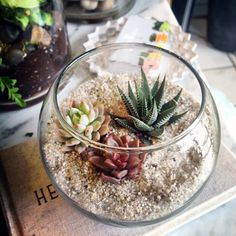 Assorted succulents in glass fishbowl with sandy topper – Terrariums 101: Tips, Tricks, and Inspiration – via The Sill