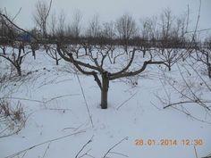 "Tăieri la pomii fructiferi făcute de ""specialiști"" - YouTube Fruit Trees, Grape Vines, Snow, Gardening, Outdoor, Youtube, Outdoors, Vineyard Vines, Lawn And Garden"