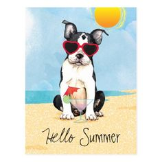 Summer Boston Terrier Postcard   pug memes, pugs funny quotes, pugs and kisses valentines #Pawfect #giftsforpeople #christmascountdown Boston Terrier Dog, Terrier Puppies, White Pug, Pug Pillow, Shetland Sheepdog Puppies, Pugs And Kisses, Havanese Dogs, Cute French Bulldog, Getting A Puppy