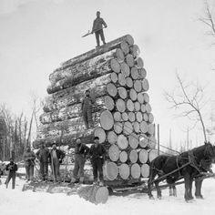 Draft horses drawing a huge sledge of logs