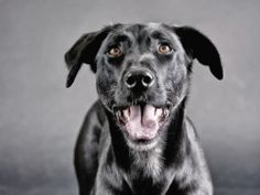 There are lots of very good reasons for having a female dog spayed and a male neutered some of which involve reducing the risk of them developing health i. I Love Dogs, Cute Dogs, Dog Spay, Living With Dogs, Best Dogs, Dog Lovers, Labrador Retriever, Pets, Animals