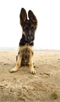 Adorable dog ears omggggg. Cutest post I've seen all night.