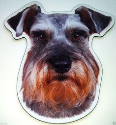 ***Miniature Schnauzer Magnet***Anywhere / Car Magnet