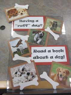 can ask fellow librarians to contribute a photo of their animals! cats, dogs, lizards, etc. Library Decorations, Library Themes, Library Activities, Library Ideas, Middle School Libraries, Elementary School Library, Teen Library Displays, Reading Display, Library Bulletin Boards