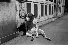 Richard Kalvar  Tired Dog, Paris, 1974  © Richard Kalvar, Magnum Photos