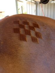 How to make shark's teeth and fun quarter marks on your horse ! http://www.proequinegrooms.com/index.php/tips/grooming/quarter-marks/