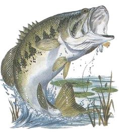 bass images of fish | ... Offers Great Places To Bass Fish As Catch-And-Keep Season Opens