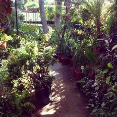 Vivero jardín imperial para ir a comprar plantitas!