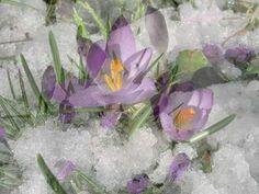 GIOVANNI MARRADI  - L'ultima neve di primavera