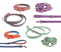 Colorful Leather Dog Collars and Leads from Throw & Phetch