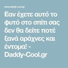 Eαν έχετε αυτό το φυτό στο σπίτι σας δεν θα δείτε ποτέ ξανά αράχνες και έντομα! - Daddy-Cool.gr