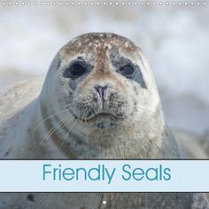 Friendly Seals - CALVENDO calendar by Kattobello #calendar #seals #animals #photography