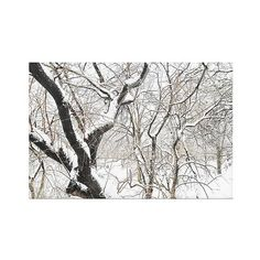 Ariane Moshayedi Snowy Trees Canvas Art - Snowflake ($66) ❤ liked on Polyvore featuring home, home decor, wall art, snowflake, inspirational home decor, tree canvas wall art, photo tree, people tree and photo wall art
