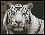 White Tiger 2 - Cross Stitch Chart