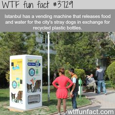 Istanbul's recycling vending machines that feeds Stray dogs - why are we not funding this? WTF not-so-fun facts