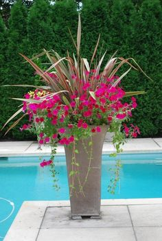 I need this by my pool to add pop of color.  This link will lead you to other container pictures.