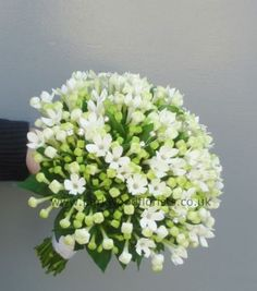 Bouvardia — clusters of small, tubular flowers.