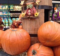 Calabazas en venta y adornadas para Halloween.