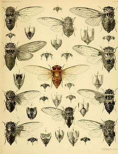 from biodivlibrary here's the high res version http://www.flickr.com/photos/biodivlibrary/9217408878/sizes/o/